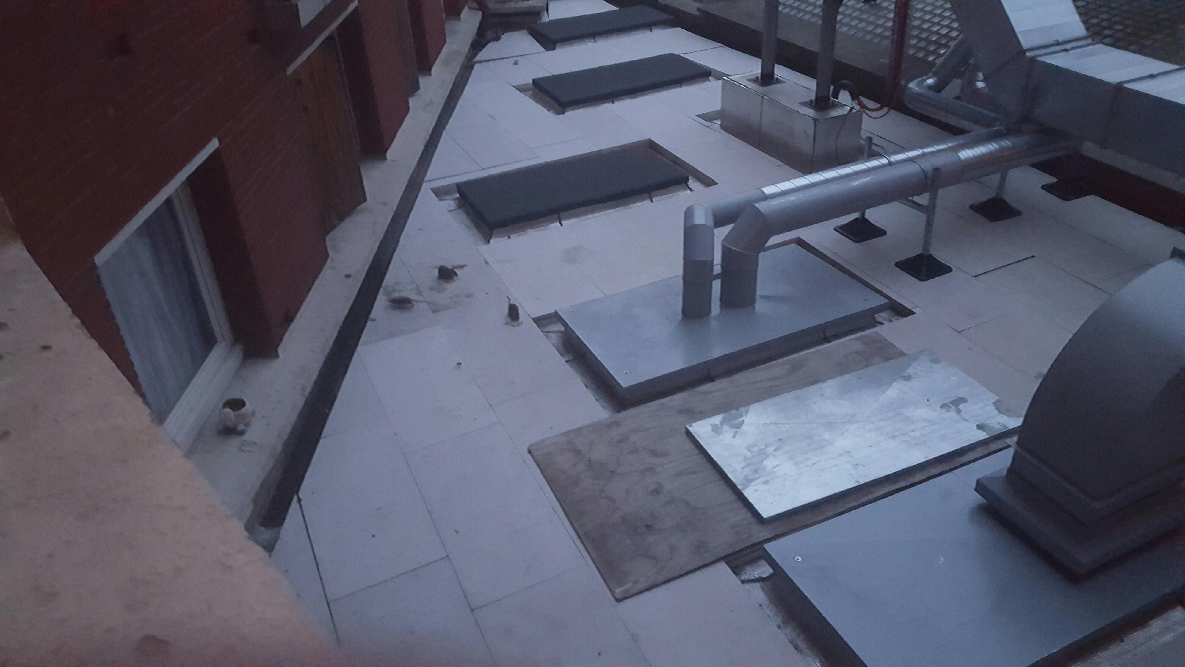 les rats sur le toit-terrasse